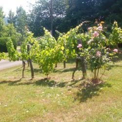 Passage du jury fleurissement juillet 2019